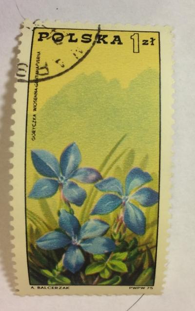 Почтовая марка Польша (Polska) Gentiana verna - Tatra Mountains   Год выпуска 1975   Код каталога Михеля (Michel) PL 2371