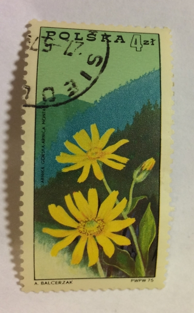 Почтовая марка Польша (Polska) Mountain arnica (Arnica montana) in Beskids Mountains | Год выпуска 1975 | Код каталога Михеля (Michel) PL 2375