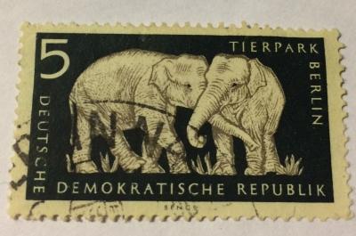 Почтовая марка ГДР (DDR) Asian Elephant (Elephas maximus) | Год выпуска 1956 | Код каталога Михеля (Michel) DD 551XI