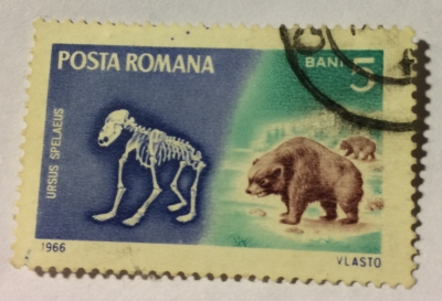 Почтовая марка Румыния (Posta Romana) Cave Bear (Ursus spelaeus) | Год выпуска 1966 | Код каталога Михеля (Michel) RO 2553