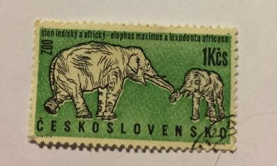 Почтовая марка Чехословакия (Ceskoslovensko ) Asian Elephant (Elephas maximus) | Год выпуска 1962 | Код каталога Михеля (Michel) CS 1338