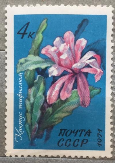 Почтовая марка СССР Кактус эпифиллюм | Год выпуска 1971 | Код по каталогу Загорского 4014