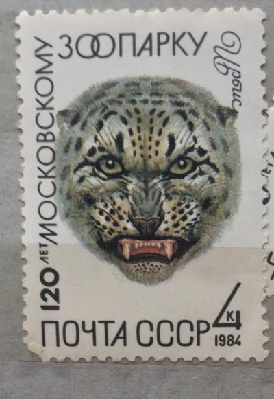 Почтовая марка СССР Ирбис | Год выпуска 1984 | Код по каталогу Загорского 5410