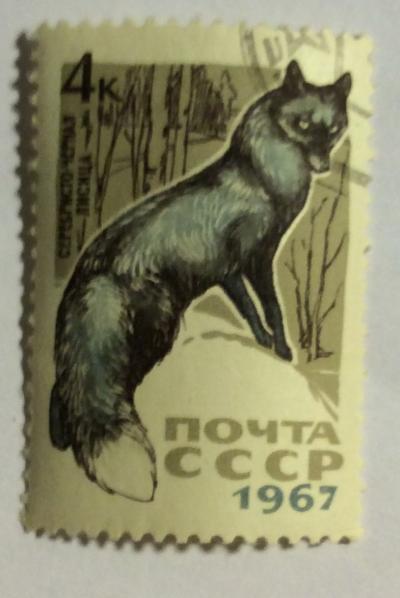 Почтовая марка СССР Серебристо-черная лиса   Год выпуска 1967   Код по каталогу Загорского 3443-2