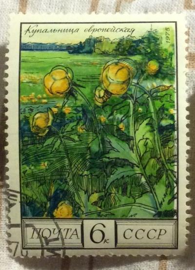 Почтовая марка СССР Купальница европейская | Год выпуска 1975 | Код по каталогу Загорского 4479
