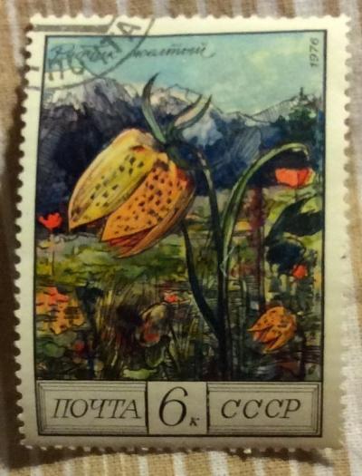 Почтовая марка СССР Желтый рябчик.   Год выпуска 1976   Код по каталогу Загорского 4599