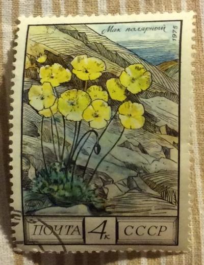 Почтовая марка СССР Мак полярный   Год выпуска 1975   Код по каталогу Загорского 4478