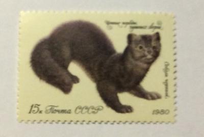 Почтовая марка СССР Черный соболь | Год выпуска 1980 | Код по каталогу Загорского 5022