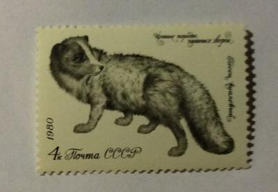 Почтовая марка СССР Вуалевый песец   Год выпуска 1980   Код по каталогу Загорского 5019