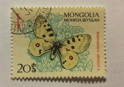 Почтовая марка Монголия - Монгол шуудан (Mongolia) Apollo (Parnassius apollo) | Год выпуска 1963 | Код каталога Михеля (Michel) MN 339