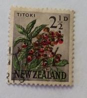 Titoki / New Zealand Oak (Alectryon excelsus)