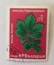 Aesculus Hippocastanum