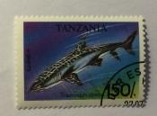 Whitetip Reef Shark (Triaenodon obesus)