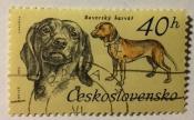 Bavarian Bloodhound (Canis lupus familiaris)