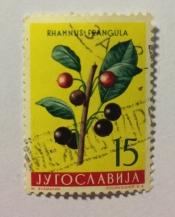 Alder blackthorn (Rhamnus frangula)