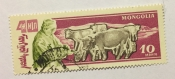Cattle (Bos primigenius taurus)