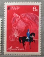 Арабская лошадь