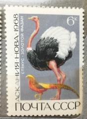 Страус и золотой фазан