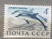 Дельфин-белобочка .
