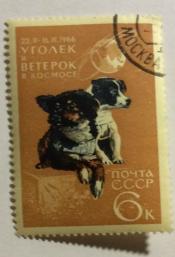 """Собаки Уголек и Ветерок, находившиеся на борту ИО """"Космос 110"""""""