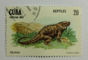Cuban Rock Iguana (Cyclura nubila)