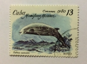 Cuvier's Beaked Whale (Ziphius cavirostris)