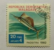 Indo-Pacific Sailfish (Istiophorus platypterus)