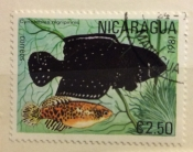 Blackfin Pearlfish (Austrolebias nigripinnis)