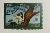 Cuban Pygmy Owl (Glaucidium siju)