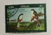 Cuban Trogon (Priotelus temnurus)