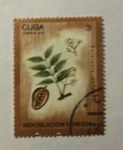 Calophyllum brasiliense