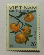 Tangerines (Citrus reticulata)
