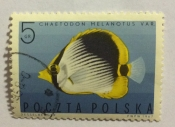 Blackback Butterflyfish (Chaetodon melanotus)
